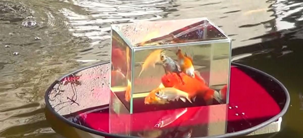 fische kaufen berlin
