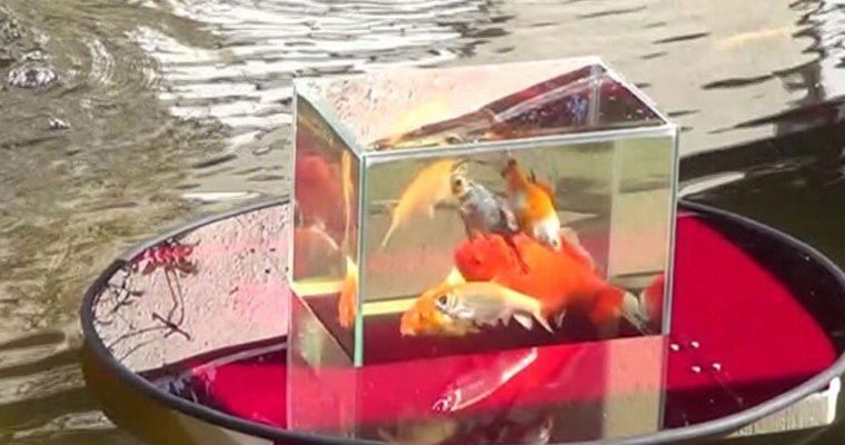 Fische schweben über dem Teich